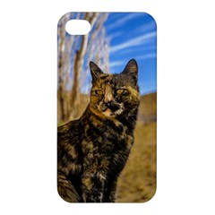 Adult Wild Cat Sitting and Watching Apple iPhone 4/4S Premium Hardshell Case