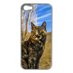 Adult Wild Cat Sitting and Watching Apple iPhone 5 Case (Silver)