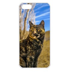 Adult Wild Cat Sitting and Watching Apple iPhone 5 Seamless Case (White)