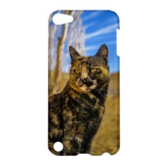 Adult Wild Cat Sitting And Watching Apple Ipod Touch 5 Hardshell Case