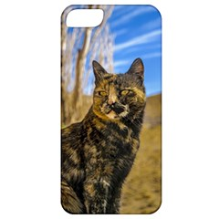 Adult Wild Cat Sitting and Watching Apple iPhone 5 Classic Hardshell Case