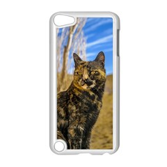 Adult Wild Cat Sitting and Watching Apple iPod Touch 5 Case (White)