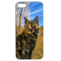 Adult Wild Cat Sitting and Watching Apple iPhone 5 Hardshell Case with Stand