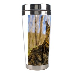 Adult Wild Cat Sitting and Watching Stainless Steel Travel Tumblers