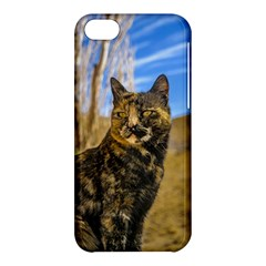 Adult Wild Cat Sitting and Watching Apple iPhone 5C Hardshell Case