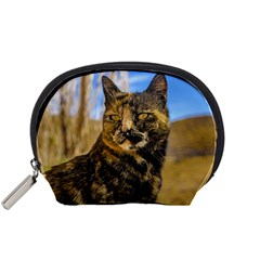Adult Wild Cat Sitting and Watching Accessory Pouches (Small)