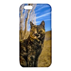 Adult Wild Cat Sitting and Watching iPhone 6/6S TPU Case