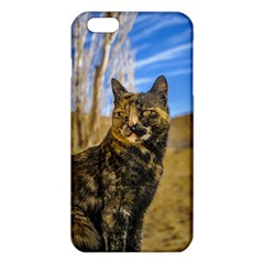 Adult Wild Cat Sitting and Watching iPhone 6 Plus/6S Plus TPU Case