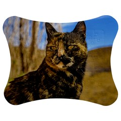Adult Wild Cat Sitting and Watching Jigsaw Puzzle Photo Stand (Bow)
