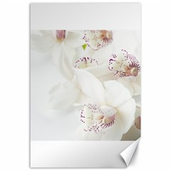 Orchids Flowers White Background Canvas 24  x 36