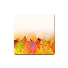 Autumn Leaves Colorful Fall Foliage Square Magnet