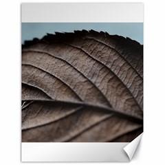 Leaf Veins Nerves Macro Closeup Canvas 18  x 24