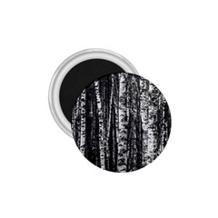 Birch Forest Trees Wood Natural 1.75  Magnets