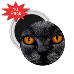 Cat Eyes Background Image Hypnosis 2.25  Magnets (10 pack)