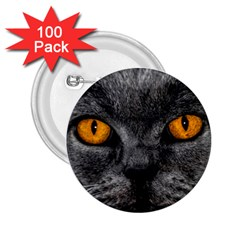 Cat Eyes Background Image Hypnosis 2.25  Buttons (100 pack)