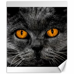 Cat Eyes Background Image Hypnosis Canvas 20  x 24