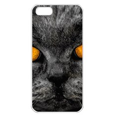 Cat Eyes Background Image Hypnosis Apple iPhone 5 Seamless Case (White)