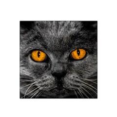 Cat Eyes Background Image Hypnosis Satin Bandana Scarf