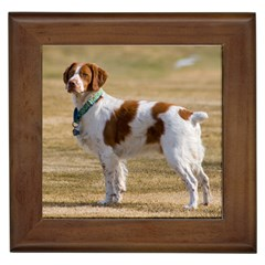 Brittany Spaniel Full Framed Tiles