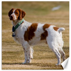 Brittany Spaniel Full Canvas 16  x 16