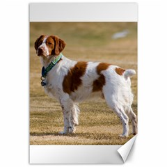 Brittany Spaniel Full Canvas 24  x 36