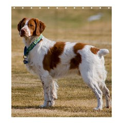 Brittany Spaniel Full Shower Curtain 66  x 72  (Large)