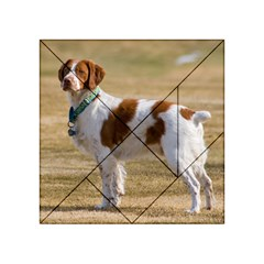 Brittany Spaniel Full Acrylic Tangram Puzzle (4  x 4 )