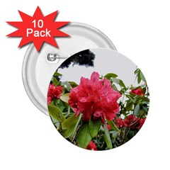 Virginia Waters Flowers 2.25  Buttons (10 pack)
