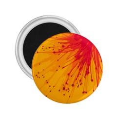 Big Bang 2 25  Magnets