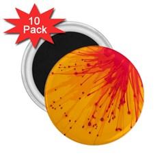 Big Bang 2 25  Magnets (10 Pack)