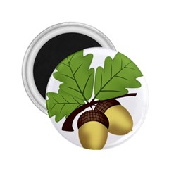 Acorn Hazelnuts Nature Forest 2 25  Magnets