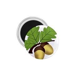 Acorn Hazelnuts Nature Forest 1 75  Magnets
