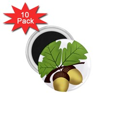 Acorn Hazelnuts Nature Forest 1 75  Magnets (10 Pack)