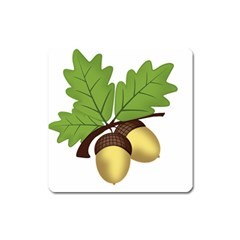 Acorn Hazelnuts Nature Forest Square Magnet