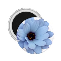 Daisy Flower Floral Plant Summer 2 25  Magnets
