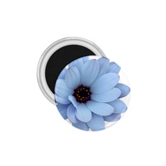 Daisy Flower Floral Plant Summer 1 75  Magnets