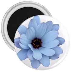 Daisy Flower Floral Plant Summer 3  Magnets