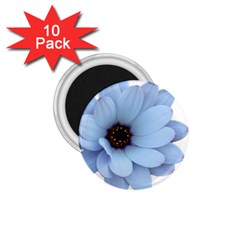 Daisy Flower Floral Plant Summer 1 75  Magnets (10 Pack)