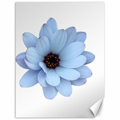 Daisy Flower Floral Plant Summer Canvas 12  x 16