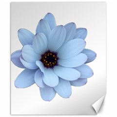 Daisy Flower Floral Plant Summer Canvas 20  x 24