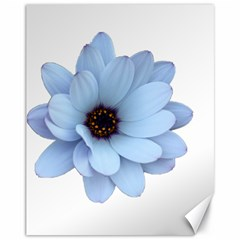 Daisy Flower Floral Plant Summer Canvas 11  x 14