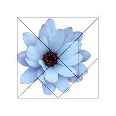 Daisy Flower Floral Plant Summer Acrylic Tangram Puzzle (4  X 4 )