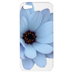 Daisy Flower Floral Plant Summer Apple Iphone 5 Hardshell Case