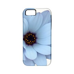Daisy Flower Floral Plant Summer Apple Iphone 5 Classic Hardshell Case (pc+silicone)