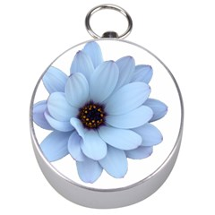 Daisy Flower Floral Plant Summer Silver Compasses
