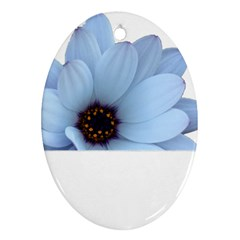 Daisy Flower Floral Plant Summer Ornament (oval)
