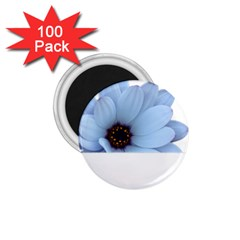 Daisy Flower Floral Plant Summer 1 75  Magnets (100 Pack)