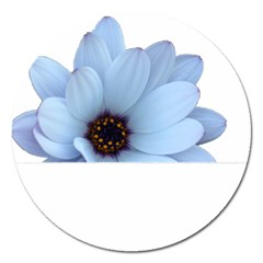 Daisy Flower Floral Plant Summer Magnet 5  (round)