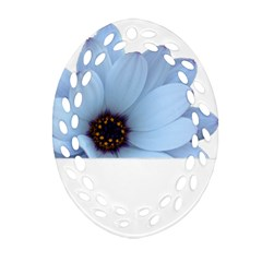 Daisy Flower Floral Plant Summer Ornament (oval Filigree)