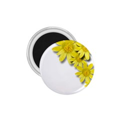 Flowers Spring Yellow Spring Onion 1.75  Magnets